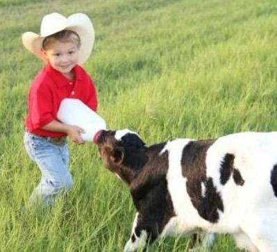Dairy Farm Tours In Florida